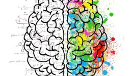 Illustration of a brain showing logic on left and color on right