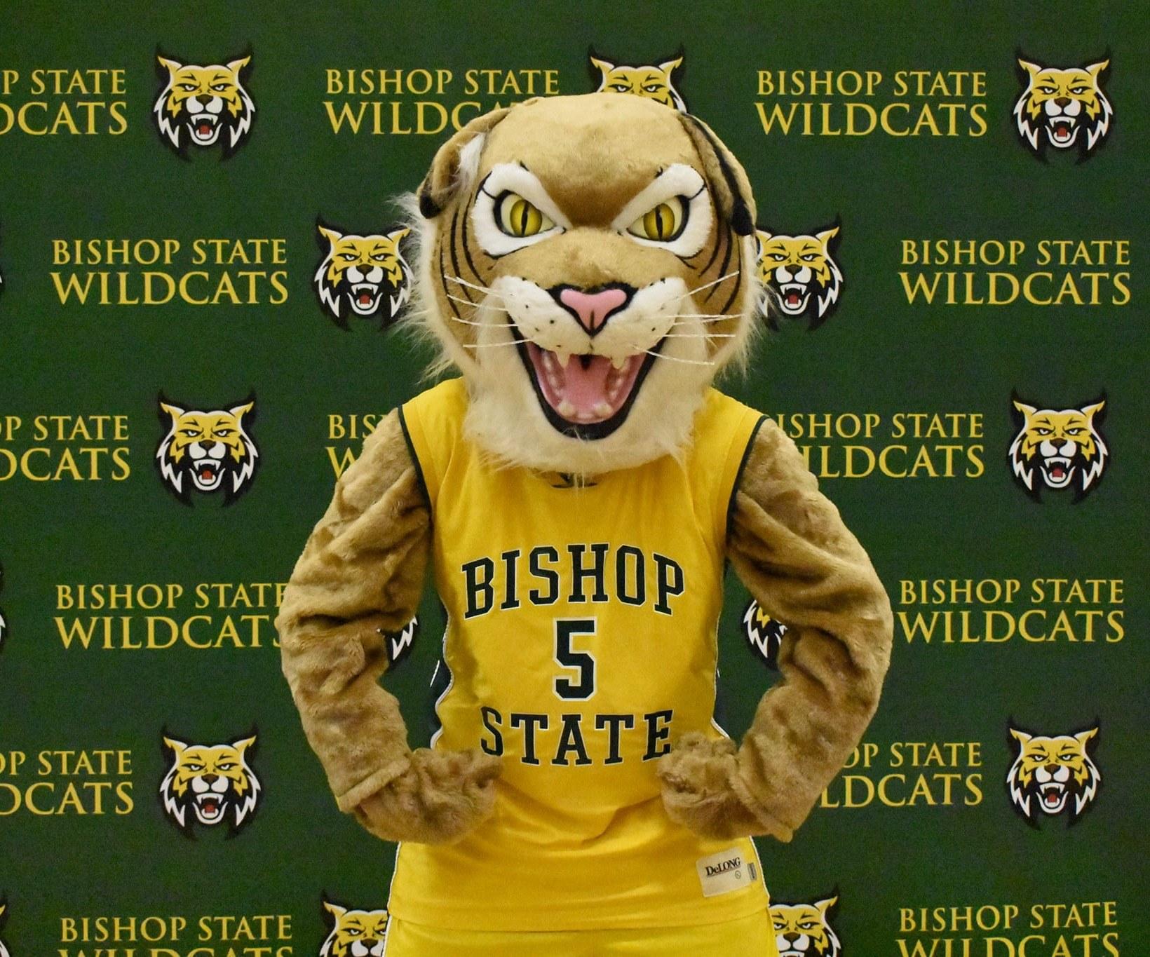 Sanford the Wildcat